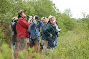 Birding with Jim Wilson