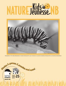 Nature Kids cover website