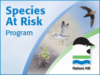 Species at Risk Program