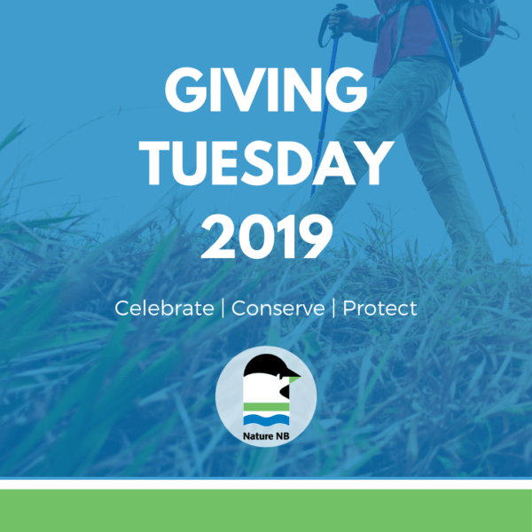Giving Tuesday Cover Image
