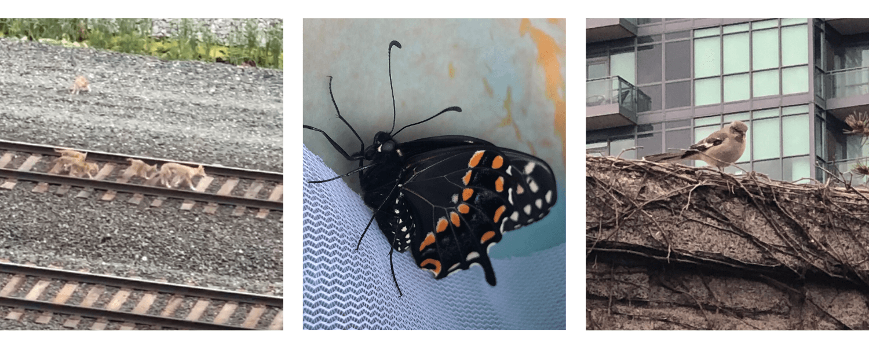 Wildlife in the City / La faune urbaine sauvage
