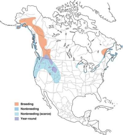 Barrows Goldeneye Distribution Map